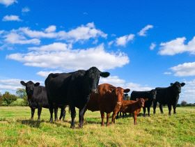 Weekly protein digest: EU beef consumption on downward trend